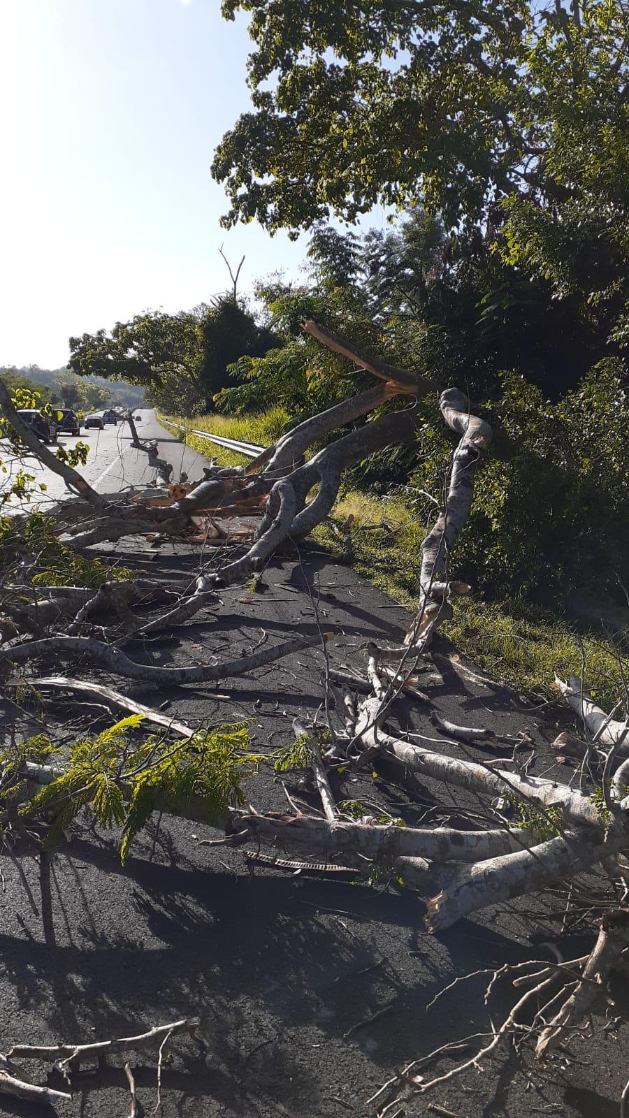 Cae un árbol y obstruye el paso en la carretera PR 1 en Caguas