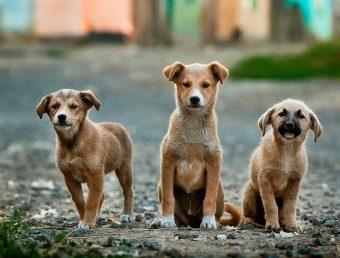 El 20/22 Act Society repudia el maltrato animal que ocurrió en Río Grande (Ampliación)