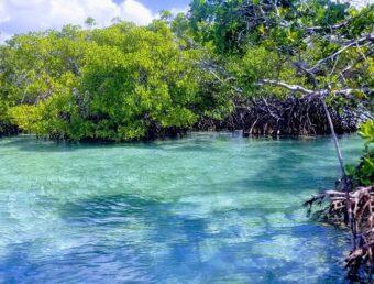 Aviso: DRNA anuncia apertura de las Áreas Naturales Protegidas y Recreativas a partir del 1 de julio de 2020