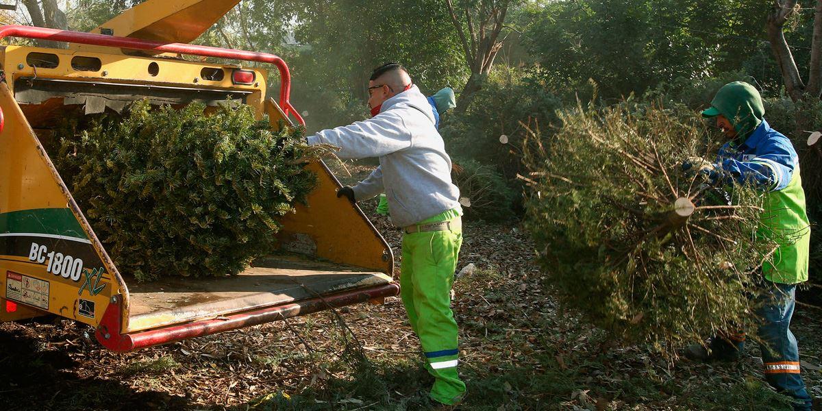 DRNA y el Municipio de San Juan se unen para reciclar árboles de Navidad