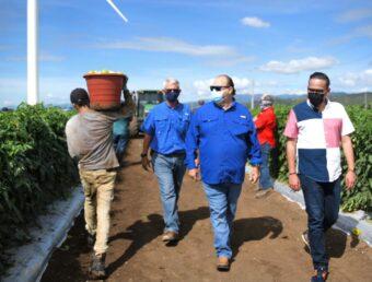 Cientos de boricuas dispuestos a trabajar en actividades agrícolas se ponen a la disposición de los dueños de fincas