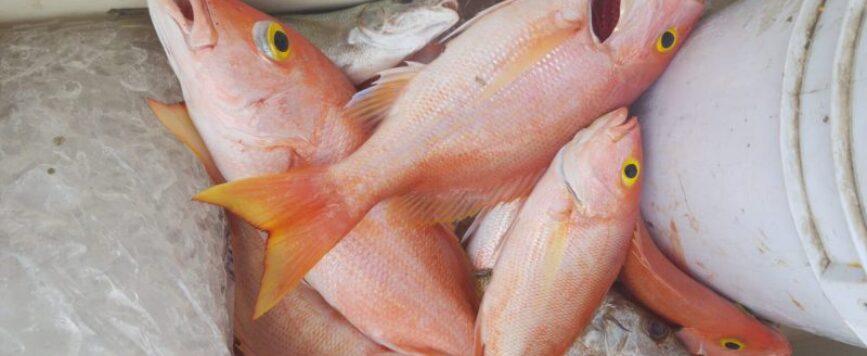 Secretario de Agricultura insta a visitar las villas pesqueras