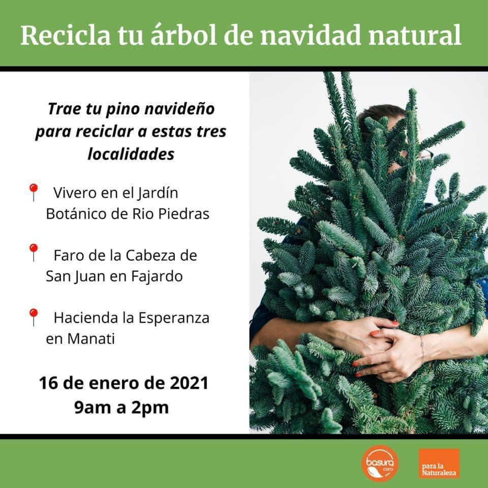 Reciclarán árboles navideños en cuatro centros de acopio en la Isla