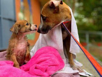 Santuario de Animales pide ayuda para atender y costear los gastos de cachorros rescatados