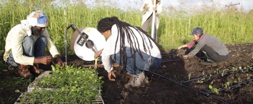 Pequeños agricultores enfrentan escollos para acceder a fondos de recuperación