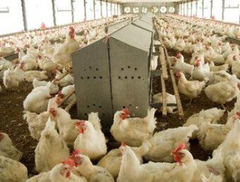 Representantes buscan alternativas de desarrollo en antigua planta avícola en Coamo