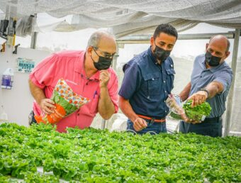 Miles de lechugas que se comercializan en el país se producen en Ciales